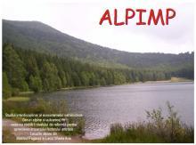 ALPIMP
